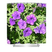 Petunias Purple Club Shower Curtain