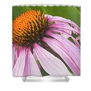 Purple Cone Flower Echinacea Shower Curtain