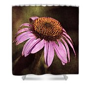 Purple Cone Flower II Shower Curtain