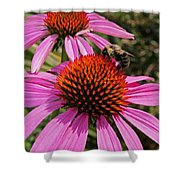 Purple Cone Flower With Bee Shower Curtain