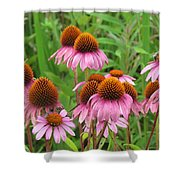 Purple Cone Flowers Shower Curtain