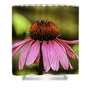Purple Coneflower - Single Shower Curtain