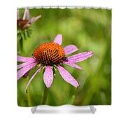 Purple Coneflower 8732 Shower Curtain