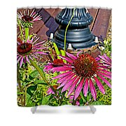 Purple Coneflowers By Former Railroad Depot In Pipestone-minnesota Shower Curtain