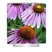 Purple Coneflowers - D007649a Shower Curtain
