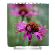 Purple Coneflowers In A Row Shower Curtain