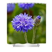 Purple Cornflower Shower Curtain