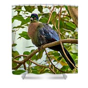 Purple-crested Touraco Shower Curtain