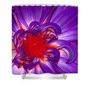Purple Dahlia Shower Curtain