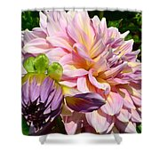 Purple Dahlia With Bud Shower Curtain