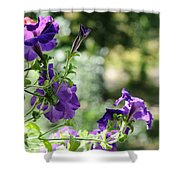 Purple Delight. Petunia Bloom Shower Curtain