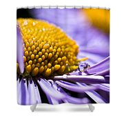 Purple Drop Shower Curtain