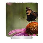 Purple Echinacea Flower Shower Curtain