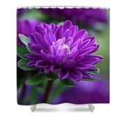 Purple Escape  Shower Curtain