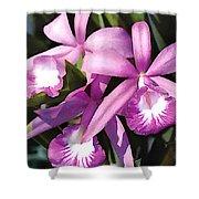 Purple Flock Of Cattleya Orchids Shower Curtain