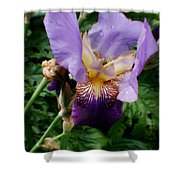 Purple Flower After Rainfall Shower Curtain by Doc Braham