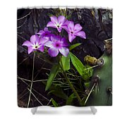 Purple Flower At Enchanted Rock Shower Curtain
