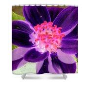 Purple Flower - Photopower 257 Shower Curtain