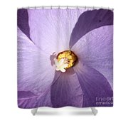 Purple Flower Square Shower Curtain