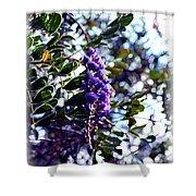 Purple Flowering Tree Shower Curtain