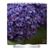 Purple Flowers 1 Shower Curtain