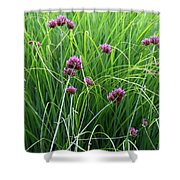 Purple Flowers And Grasses Shower Curtain