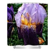 Purple Flowers In England Shower Curtain