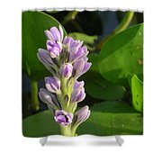 Purple Flowers In The Pantanal Shower Curtain