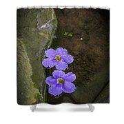 Purple Flowers Shower Curtain