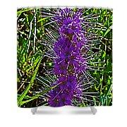 Purple Fringe On Bald Mountain In Ketchum-idaho Shower Curtain