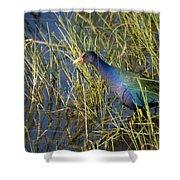 Purple Gallinule 2 Shower Curtain
