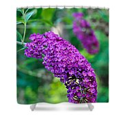 Butterfly Bush Garden Flower Shower Curtain