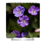 Purple Geranium Flowers Shower Curtain