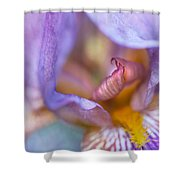 Purple Glow. Macro Iris Series Shower Curtain