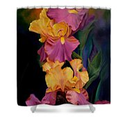 Purple Gold Irises  Shower Curtain