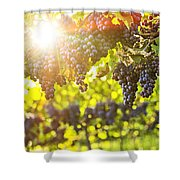 Purple Grapes In Sunshine Shower Curtain