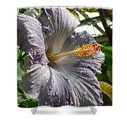 Purple Hibiscus Shower Curtain