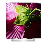 Purple Hibiscus Shot From Behind. Shower Curtain