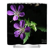 Purple Highlights Shower Curtain