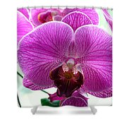 Purple Infusion Shower Curtain