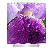 Purple Iris - 2 Shower Curtain
