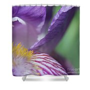 Purple Iris 1 Shower Curtain