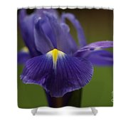 Purple Iris 6 Shower Curtain