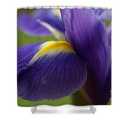 Purple Iris 8 Shower Curtain