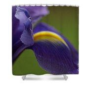 Purple Iris 9 Shower Curtain