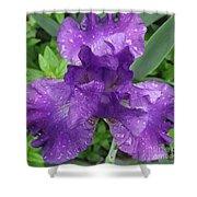 Purple Iris After The Rain Shower Curtain