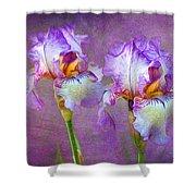 Purple Iris Shower Curtain by Lena Auxier