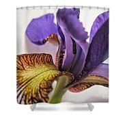 Purple Iris Macro 5 Shower Curtain