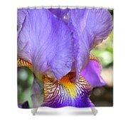 Purple Iris Macro Shower Curtain