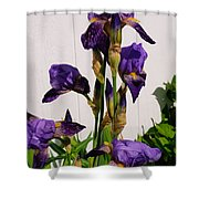 Purple Iris Stalk Shower Curtain